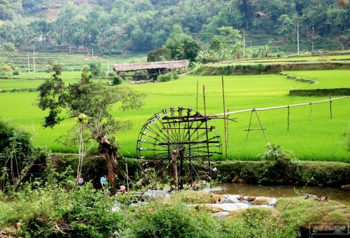 Water wheel in a rice field in Vietnam