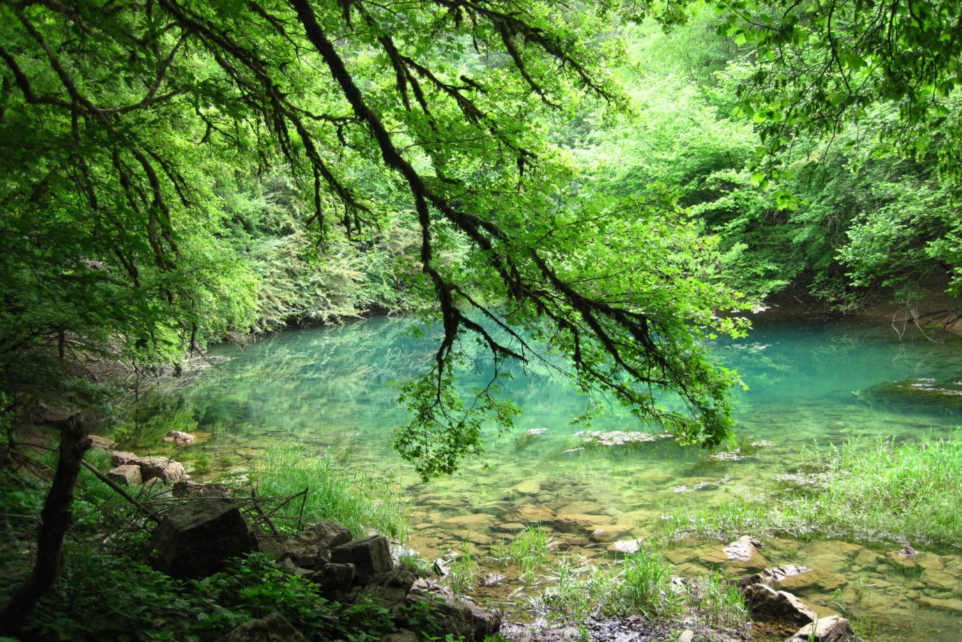 Branch with green leaves falling in Cerknica blue lake in Slovenia