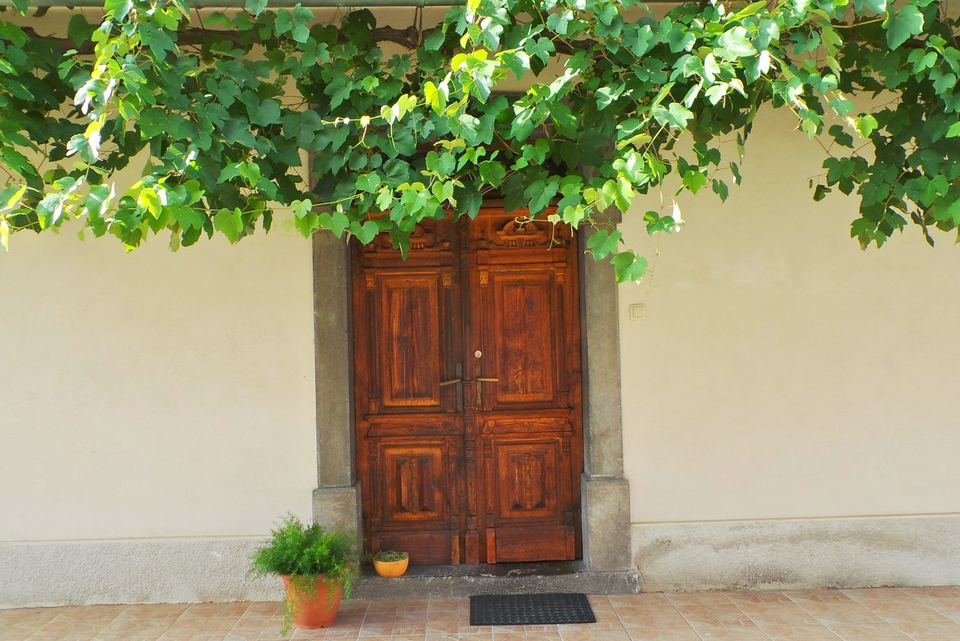 Green foliage covering an old wooden door