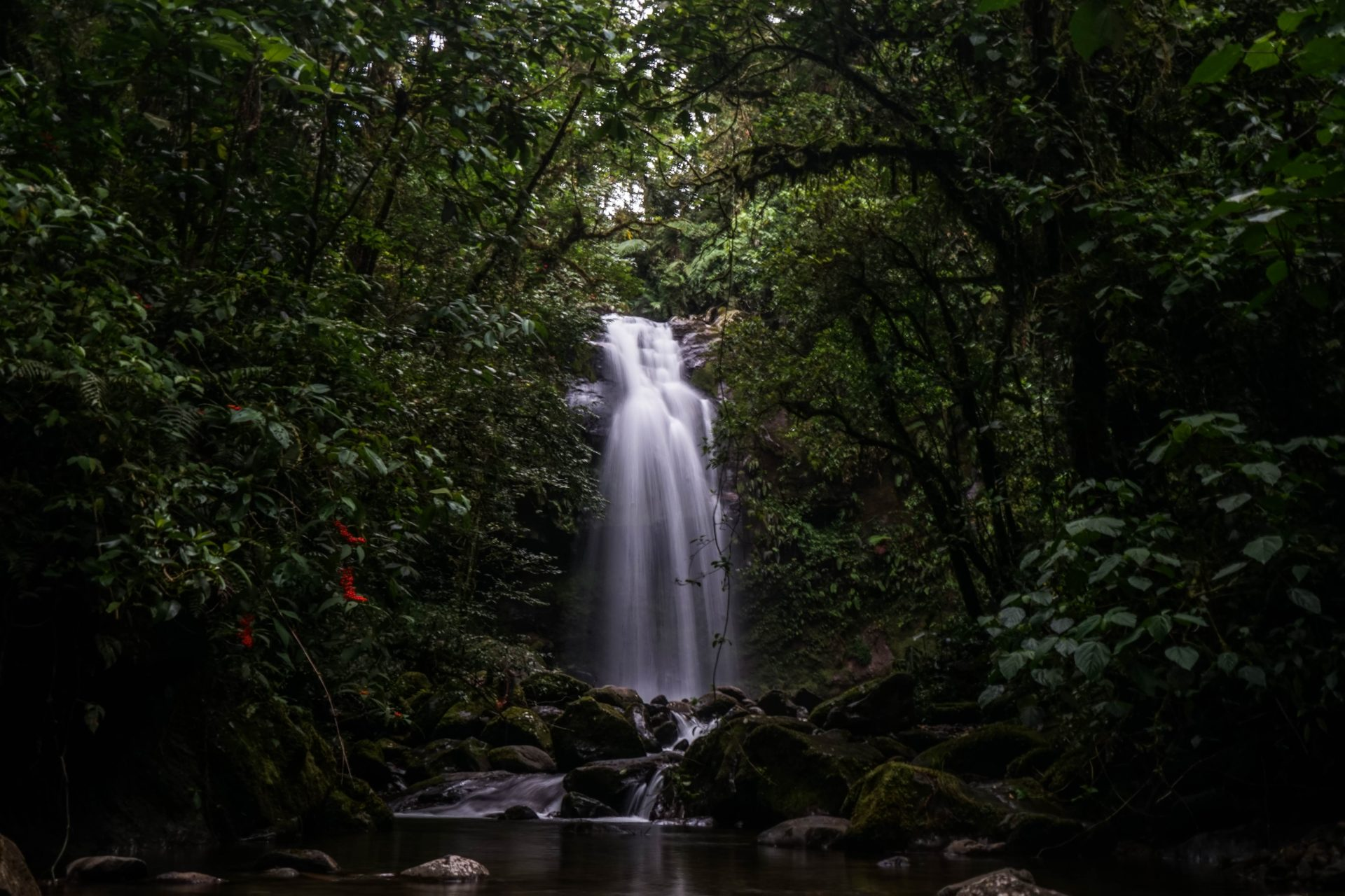 Small waterfall falling in between trees and forming a little pool
